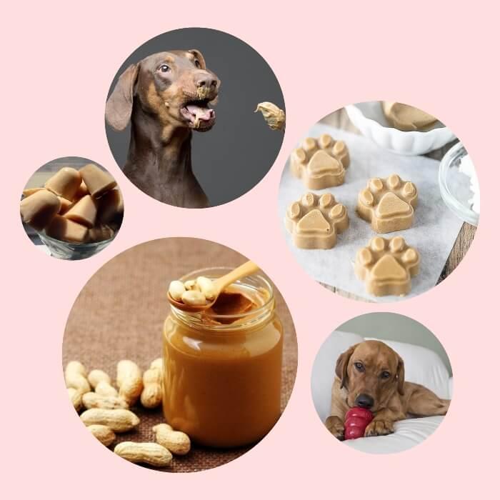 perro contento comiendo mantequilla de maní