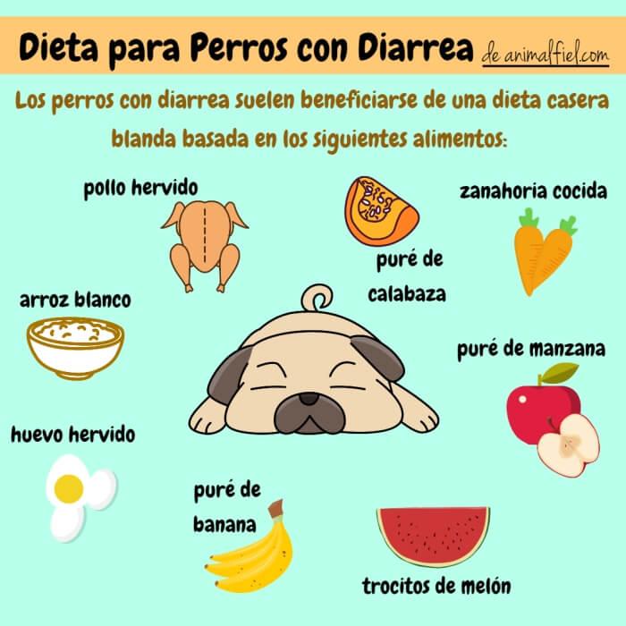 imagen diseño sobre alimentos para perros con diarrea