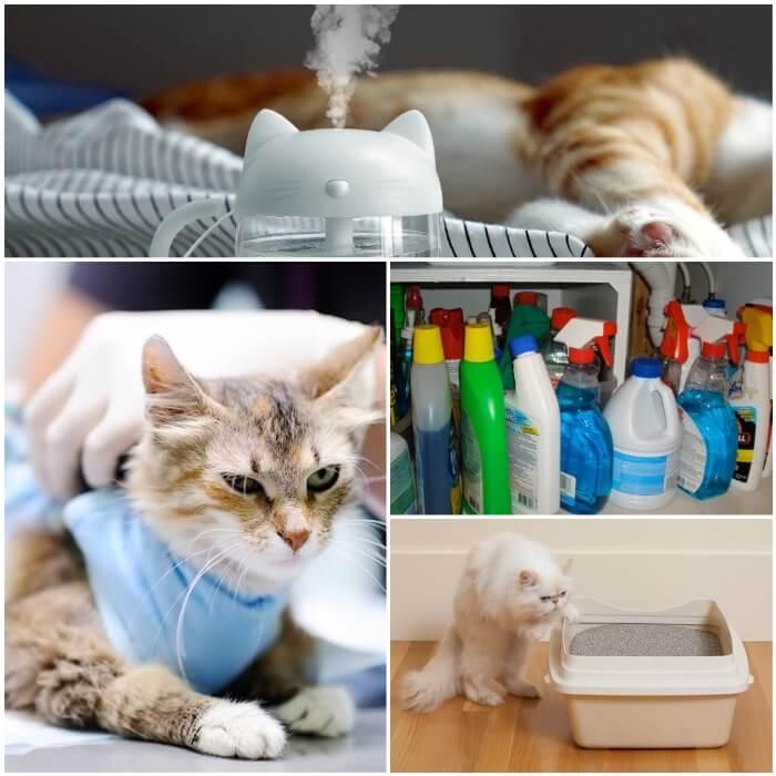 gato acostado junto a un humidificador del aire