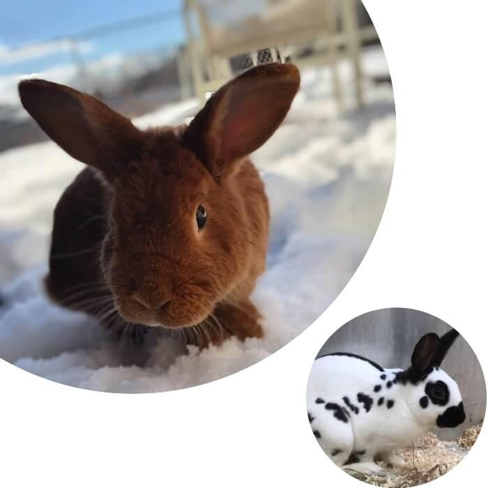 conejo marrón sobre la nieve
