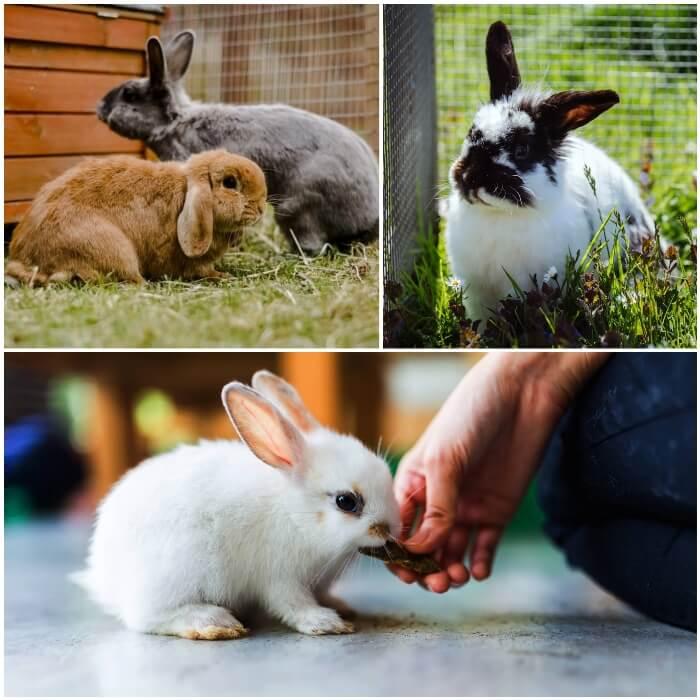 conejo pequeño comiendo de la mano del dueño
