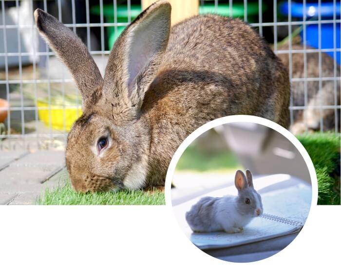 conejo grande y gris sobre la hierba verde