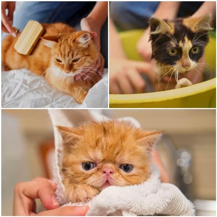 gatico recién bañado envuelto en una toalla