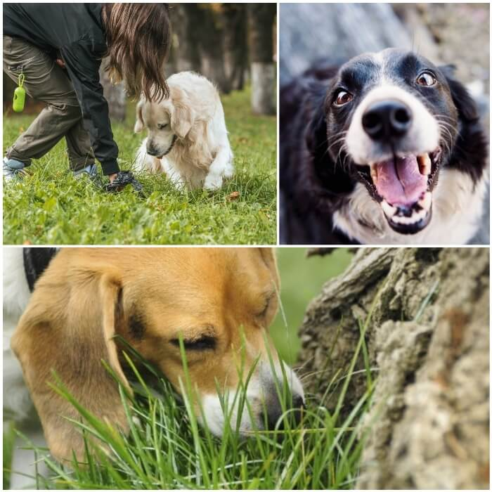 perro al aire libre olfateando la hierba