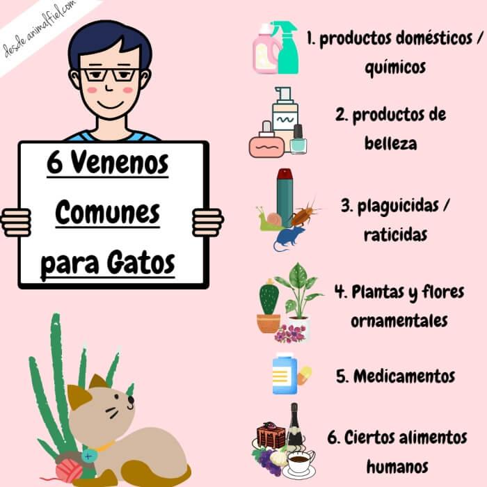 imagen diseño sobre tipos de venenos para gatos