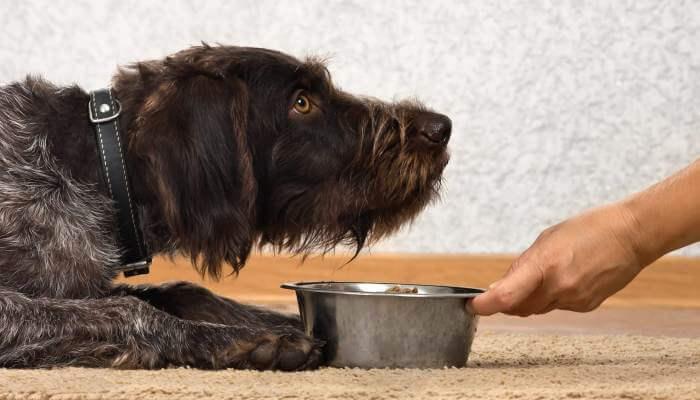 perro echado frente a su bowl de comida
