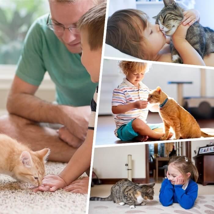 gatico pequeño olfateando la mano de un niño