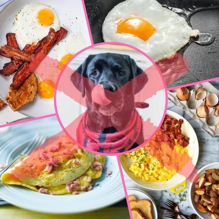 preparaciones de huevo no aptas para perros