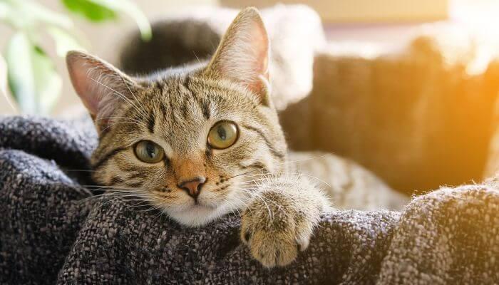 gato asomando la cabeza por encima del mueble