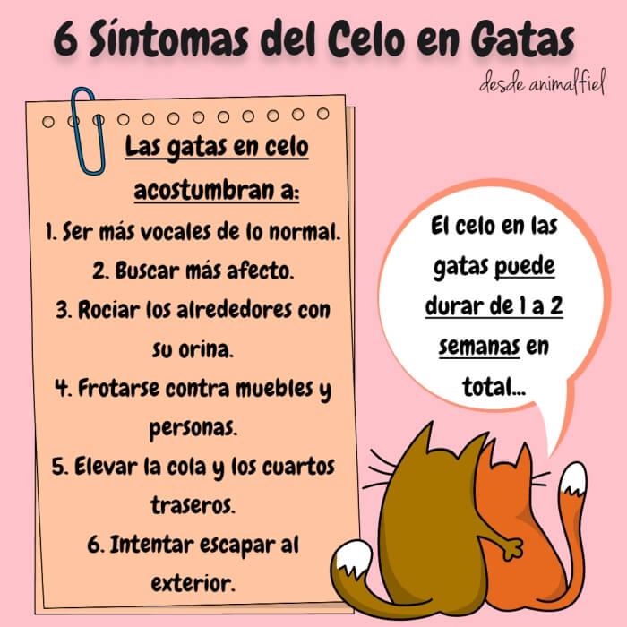 imagen diseño sobre el celo en gatas