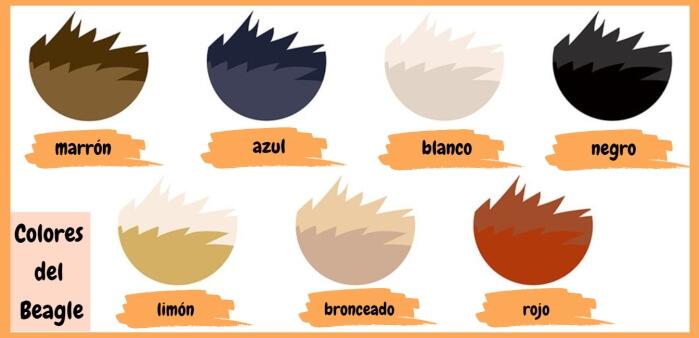 imagen con colores primarios de la raza beagle