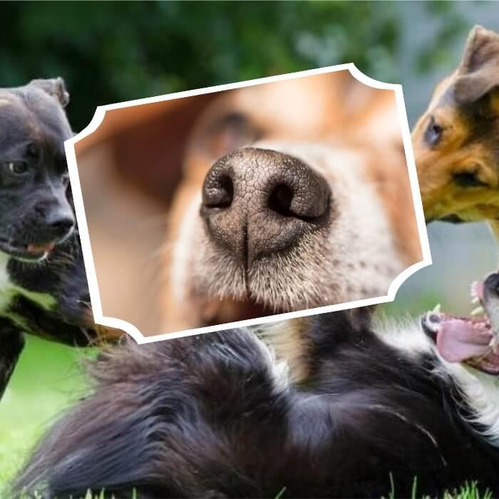 perros jugando al aire libre